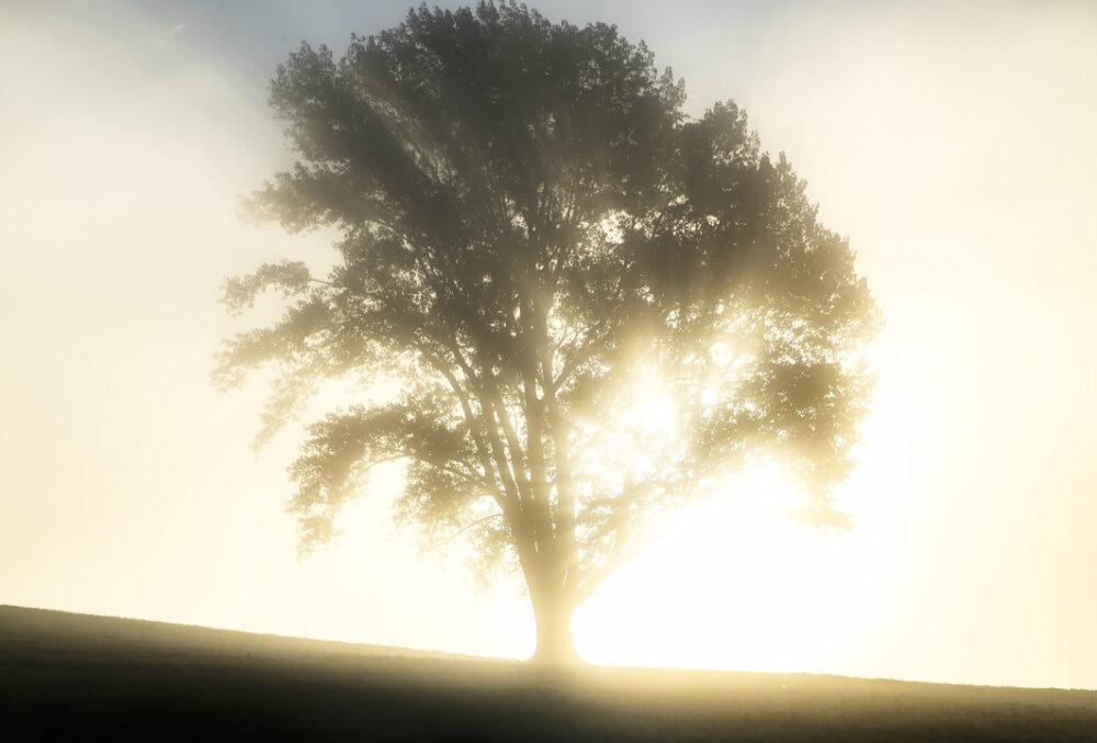 照らされる木